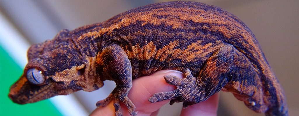 SLIDE-Gargoyle.Gecko_Halloween