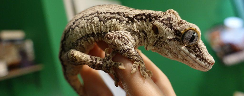 SLIDE-Gargoyle.Gecko_Jack_BnW.Stripe